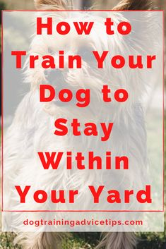 How to Train Your Dog to Stay Within Your Yard. How to Train Your Dog to Stay Within Your Yard. Havanese Dogs, Goldendoodles, Pet Life, Old Dogs, Dog Behavior, Dog Training Tips, New Puppy, Dog Care, Dog Grooming