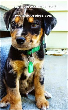 Accessorized Your Dogs with Cute Stuff ** Visit the image link for more details. #dog Rare Dogs, Rare Dog Breeds, Kitten Breeds, Cute Dogs Breeds, Puppy Breeds, Small Dog Breeds, Animals And Pets, Baby Animals, Cute Animals
