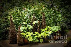 Sunnylea Summer Scene by Marilyn Cornwell Blossom Garden, Summer Scenes, Serenity, Instagram Images, Bloom, Design Inspiration, Wall Art, Artwork, Artist