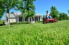 Proper lawn maintenance includes frequent watering and mowing. Get best lawn maintenance tips for green grass, quicker mowing or no-mow lawn ideas. Hire our experienced treasure today and get that job done on same day. Scott Lawn Care, Lawn Problems, Scotts Lawn, Lawn Care Companies, Insurance Companies, Planting Grass, Lawn Care Tips, Lawn Fertilizer, Gardens