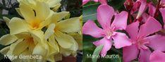 M.G., M. Mauron Plants, Plant, Planets