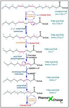 Oxidation of polyunsaturated fatty acids