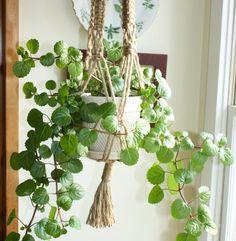 10 of the Best Indoor Climbing Plants and Vines Indoor Climbing Plants, Ivy Plant Indoor, Hanging Plants, Ivy Houseplant, Ivy Plants, Houseplants, Chicken Garden, House Plants Decor, Bedroom Plants