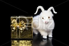 Qdiz Stock Photos | Goat or sheep with gift box,  #2015 #asia #background #black #box #celebrate #celebration #character #china #chinese #closeup #concept #culture #decoration #decorative #doll #east #ewe #festival #figure #fun #funny #gift #goat #gold #golden #greeting #holiday #horns #japanese #lamb #little #mutton #new #object #package #postcard #present #religion #sheep #small #surprise #symbol #toy #tradition #traditional #white #year #yellow #zodiac