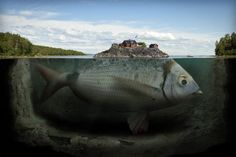 Photography + photoshop: Erik Johansson's surreal photo worlds. Swedish retouching photographer Erik Johansson is a master of illusion. He uses a computer to create pictorial worlds that look. Photomontage, Erik Johansson Photography, Creative Photography, Art Photography, Improve Photography, Fishing Photography, Photography Articles, Amazing Photography, Illusion Fotografie