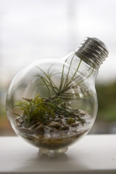 Lightbulb Terrariums