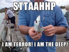 I'm a terrifying, tiny shark…