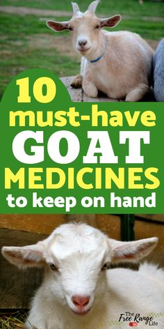 Like all animals, goats can get sick. Be prepared when you are raising goats and keep these goat medications on hand at all times.
