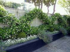 Co Co's Collection : Formal garden # structure # roses # boxwood The espalier has filled in with jasmine biding form and fragrance to this brick wall