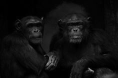 """Out of the Wild: Zoo Portraits"" by Boza Ivanovic"