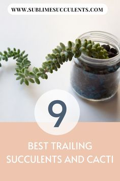 Your garden is getting crowded, but you can't stop buying new succulents and cacti. So, now is the time to make trailing succulents and cacti. Succulent Outdoor, Succulent Planter Diy, Succulent Care, Succulent Gardening, Flowering Succulents, Cacti And Succulents, Cactus Plants, Rat Tail Cactus, Succulent Species