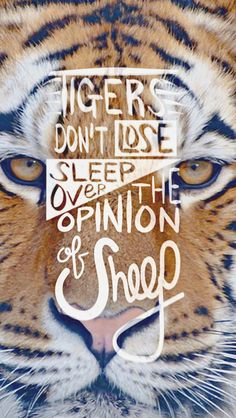 Tigers don't lose sleep over the opinion of sheep.