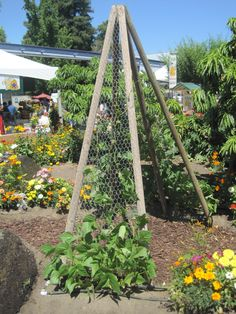 good idea | need to add chicken wire to my pea/bean trellises