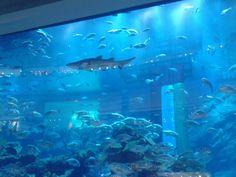 Finding Nemo...in Dubai Mall