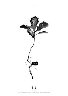 Grow Oak, nice black and white poster by Dry Things. Printed on uncoated paper. Typography Design, Branding Design, Creative Inspiration, Design Inspiration, Black And White Posters, Grafik Design, Illustrations, Graphic Design Illustration, Editorial Design