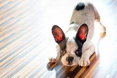 #Suelo #vinílico de #Quickstep de madera muy resistente a las manchas, arañazos, derrame de liquidos, ideales para entornos con #mascotas. #designehome  #suelos #mascotas #pets #decoracion