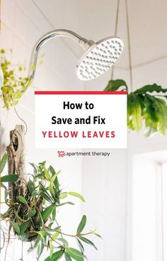 If you've ever been a concerned plant owner, then you probably know that yellowing leaves are one of the first signs that your plant is distressed. But with possible root causes ranging from underwatering, to overwatering, to a pest problem, it can be hard to get to the bottom of your plant's ailment. The next time you need to diagnose a sick houseplant, consider this your step-by-step guide.