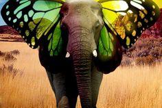 los elefantes también sueñan con volar.