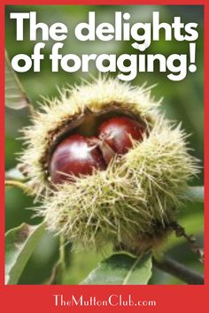 The delights of foraging! Check out what natural foods you can find if you go foraging in the woods in the autumn in the UK. A veritable treasure trove! Read this now or pin for later! Soup Cleanse, Detox Soup, Drink Plenty Of Water, Red Lentil Soup, Carrot And Ginger, Lymphatic System, Bowl Of Soup, Backyard Farming