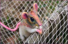 Fully-poseable mouse/rat, needle felted! Rats, Needle Felting, Parrot, Sculptures, Owl, Rainbow, Bird, Animals, Amazing