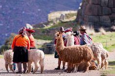 pics of llamas, el pacas | Llamas y alpacas
