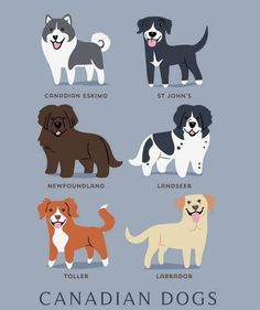 Want to know the breed of your dog? Lili Chin professionally create these cartoon-style illustration that emphasize the unique appearance of each dog. Chin's work educational, certainly helpful for any dog lover or dog owner.