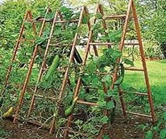 Narrow style trellis for squash, cucumber, melons, beans and other vine crops *Trellising vines increases air circulation to minimize disease problems *Keeps vines and fruits off soil for a cleaner, better harvest. Plant shade crop under trellis to maximize garden space. *Would be great for dividing the garden from the neighbor's yard.