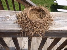 shape and look of a nest