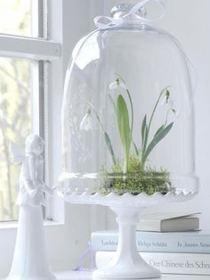 Snowdrops under glass White Cottage, Shabby Cottage, Easter Celebration, Spring Home, Happy Spring, Hello Spring, Spring Blooms, Spring Has Sprung, Lily Of The Valley