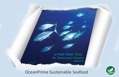 Seacore is a leading company in #SustainableSeafood. Check our website for more info or contact us to do your part!