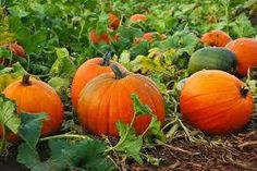 Celebrate Fall! Gather the family, bring a picnic, and choose a pumpkin from our pumpkin patch. A glass of Pinot Noir makes it all a little more fun...