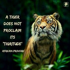 """Professor Wole Soyinka, the first African winner of the Nobel Prize literature explains,"""" A tiger does not proclaim his tigritude, he pounces. In other words, a tiger does not stand  in the forest and say, """"I am tiger"""" . When you pass where the tiger has walked before, you see skeletons of a duiker [antelope] , you know some tigritude has been emanated there."""" This proverb is simply saying, let your achievements and abilities speak for you. Do not blow your own trumpet, except during an…"""