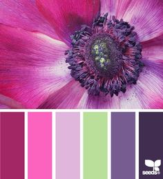flora brights by Design Seeds