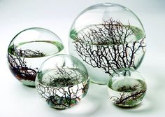 "EcoSpheres!     ""Put it somewhere with some light, and this little ecosystem will chug along happily for years, no feeding or cleaning necessary, totally oblivious to the fact that the rest of the world exists outside."""