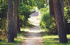 Green surroundings linked to higher test scores.