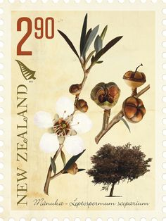 Happy Arbor Day, New Zealand! Some of your native trees are some of this stamp enthusiast's favorite trees in the whole wide world. Arbour Day, Stamp Collecting, Topiary, Botanical Illustration, Postage Stamps, New Zealand, Nativity, Poster, World