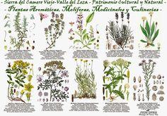 http://4.bp.blogspot.com/-zMoyRFOsJ4g/UxRYEux-tZI/AAAAAAAABpY/pA39wmluN3Y/s1600/poster_plantas_aromelmedcul.jpg