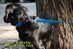 Collars from Prime Pet Source are durable and ready to work for you and your pets! Check out our wide variety of collar options: http://primepetsource.com/collars.html