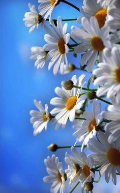 Amazing flowers - My Garden Happy Flowers, Flowers Nature, My Flower, Pretty Flowers, Flower Art, Wild Flowers, Flowers Dp, Meadow Flowers, Summer Flowers