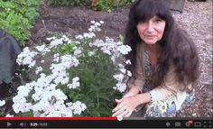 Rosemary Gladstar discusses the healing properties and uses for our ancient ally, Yarrow (Achillea millefolium).