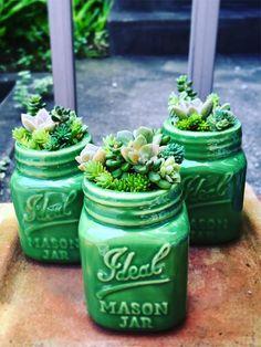 Mason Jar DIY-Ideen: Sukkulenten-Arrangements