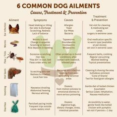 6 Common Ailments of Dogs- including the Causes, Treatment and Prevention