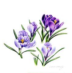 """Illustration by Ej """"Crocus"""" Watercolor pencil(250*250)"""