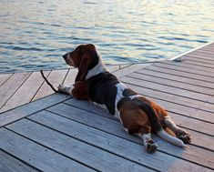 """""""stretching out with a good stick, watching the sun go down. i think i'll stay a while. ❤️"""""""