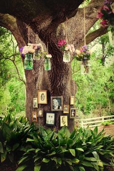 Rustic Louisiana Backyard Wedding - L O V E the photos on the tree! Unique Weddings, Real Weddings, Rustic Weddings, Outdoor Weddings, Wedding Rustic, Indian Weddings, Diy Wedding, Wedding Day, Tree Wedding