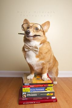 """""""Outside of a dog, a book is a man's best friend. Inside of a dog it's too dark to read."""" - Groucho Marx 