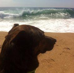 Famoso por surfar em Santos, litoral paulista, Parafina agora conhece as águas da Califórnia, onde vai disputar um campeonato no próximo domingo (25).O cã...