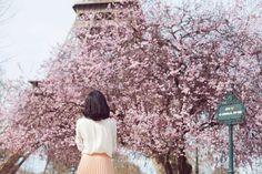 cherry-blossom-paris-nicole-warne-18