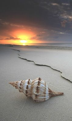 You could go to the same beach as everyone else OR you could go to an https://www.exquisitecoasts.com/ beach. You choose!