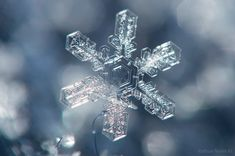 Six unbelievable close-up snowflakes that reveal the magic of winter in Michigan.